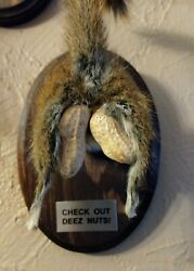 Taxidermy Squirrel Novelty Butt Rump gag gift Deez Nuts Funny. Hunter gifts $24.99