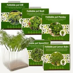5 Herbs Seeds Grow Your Own Veg Indoor Kit Plant Pot Garden Greenhouse Plant Set