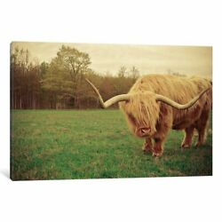 iCanvas 'Portrait Of A Scottish Highland Steer' by Olivia Joy StClaire Canvas
