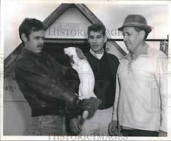 1968 Press Photo Suamico mink rancher John Moore Holds Mink for Inspection $19.99