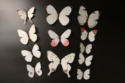 12Pc 3D Butterflies Wall Stickers Decoration Wedding Home Decor White $10.00