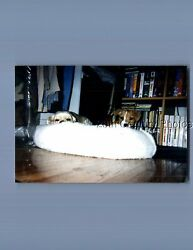 FOUND COLOR PHOTO E 1833 PUPPY DOGS LAYING IN SMALL BED $3.98