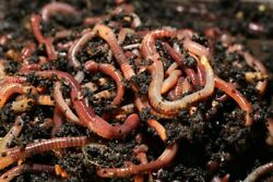 1 2 pound composting European worms about 200 250 worms  $30.00