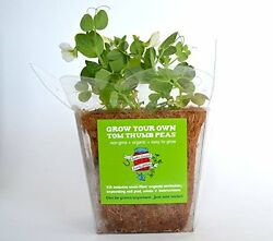 Grow Your Own Snap Peas Mini-greenhouse Kit: Grow Anywhere Vegetable Plant New