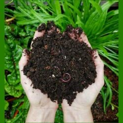 Organic Vermi Compost for Home Gardening Plant Booster 1Kg $29.34