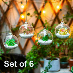 6 Pack Hanging Globe Round Glass Terrarium Air Plant Candle Holder Clear NEW $18.99