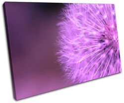 Dandelion Head Floral SINGLE CANVAS WALL ART Picture Print VA