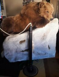 Life Size Mount Home Lodge Cabin Decor Taxidermy