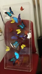 Butterfly Collection  Mounted in Clear Case Butterfly People P R 2007