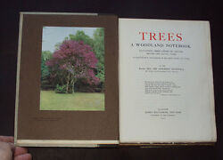 TREES: A WOODLAND NOTEBOOK British & Exotic Trees  Nature  Plants  Elms 1915