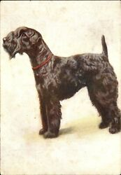 KERRY BLUE TERRIER dog collar~De Reszke Cigarette advertising postcard ~embossed