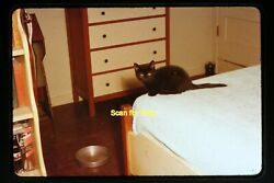 Black Cat in a Bedroom in the 1950#x27;s Anscochrome Slide aa 7 13a $9.98
