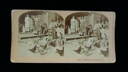 Old Antique 1891 Real Photo stereoview card genuine Virginia home chickens farm $29.99