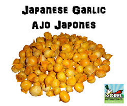Japanese Garlic (Ajo Japones) Count per bag= 30-60-130 100% Natural!