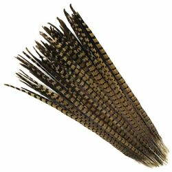 English Ringneck PHEASANT Tail Natural Feathers 10-100 Pcs MANY SIZES 6-26