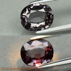 Rare! 1.48ct 7.4x6.3mm VVS Oval Natural Unheated Color Change Garnet Africa