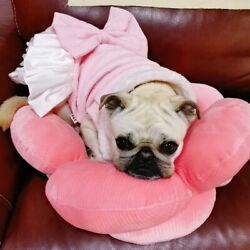 Small Dog Bed Pink Soft Sofa Cozy Fancy Cute Girl Pet Beds Mat Machine Washable $29.88