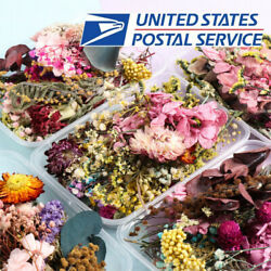 1Box Dried Flowers For DIY Art Craft Epoxy Resin Pendant Jewellery Natural Plant $10.49