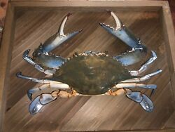 Blue Crab Classic Taxidermy Wood Mount Sealife Decorations $100.00