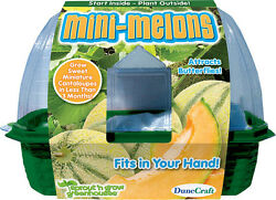 DuneCraft MINI MELONS Mini Greenhouse Science Kit Kids Crafts MADE IN USA  BD