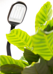 Best Agrobrite Floor LED Plant Lamp $129.00