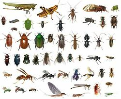 50 Dead Bugs Entomology Class Insect Bug Collection! IDENTIFIED! ALL USA NATIVE!
