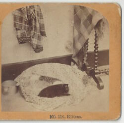 1890#x27;s Stereoview of Cats Sleeping on Small Bed Vintage Photograph $9.99