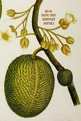 No 64. Exotic Fruit by Adventure Journals (English) Paperback Book