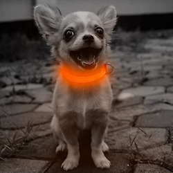 Clan X Led Dog Collar Rechargeable Light Up Dog Collars For Small Dogs Cats R $20.99