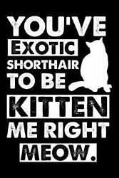 You#x27;ve Exotic Shorthair to Be Kitten Me Right Meow: Cute Exotic Shorthair Ruled $11.09
