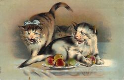 c.1907 Beautiful Embossed Cats Three Fighting over Fruit Old Postcard $8.99