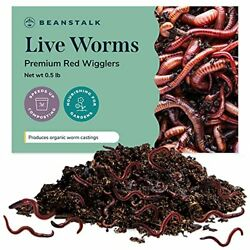 Live Worms 500 Worms 0.5 lb Red Wigglers Composting Worms Earth Worms Live $56.15