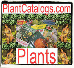 Plant Catalogs .com Mail Order Plants Tree Fruit Lemon Apple Rose Catalog Domain