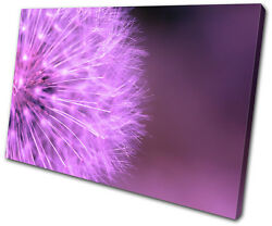 Floral Dandelion Head SINGLE CANVAS WALL ART Picture Print VA