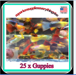 25 X Guppies Live Tropical Fish for Fish Tank Beautiful Colors $69.99