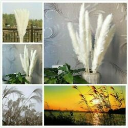 15 30Pcs Dried Pampas Grass Reed Natural Home Wedding Flower Bunch Home Decor $8.45