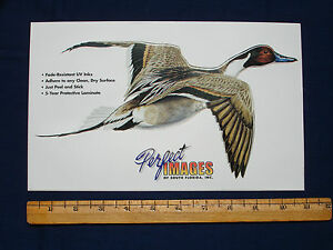 Pintail Duck Hunting Decal Sticker Al Agnew Reverse Image Also Available
