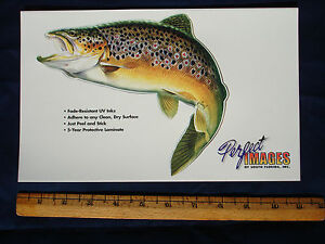 Brown Trout Fish Decal Sticker Al Agnew