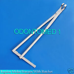 Equine Molar Forceps 21 With Ratchet Veterinary Instruments Odm v006