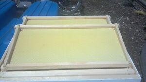 10 Frames W foundation For Langstroth Beehive Deep Brood Box super Unassembled