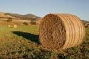 Hayandfeedforsale com Hay And or Feed For Sale This Domain Name Is For Sale