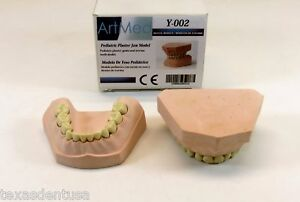 Dental Plaster Mouth Educational Model Pediatric Mold Ivorine Teeth Yeso Artmed