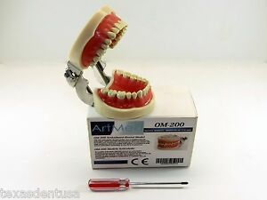 Dental Typodont Educational Om 200 Kylgore Type Nissin Removable Teeth