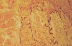 Pimento Pepperwood Burl Wood Veneer 18 X 26 Raw No Backing 1 42 Thickness