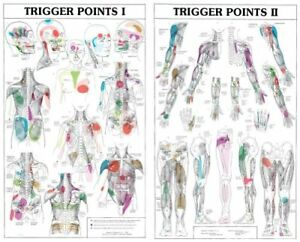 Trigger Points I And Ii Laminated Chart Poster Medical Education Human Anatomy