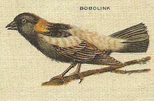 Vintage Tobacco Cigarette Silk Use In Crazy Quilt Bird Bobolink