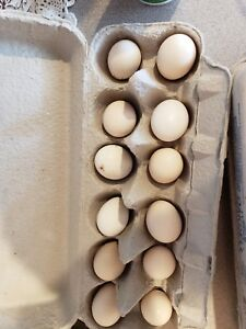 12 Npip Serama smooth And Frizzle Variety Colors Fertile Hatching Eggs