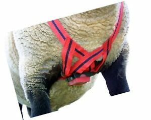 Matingmark Deluxe Ram Marking Harness For Monitoring Breeding Sheep