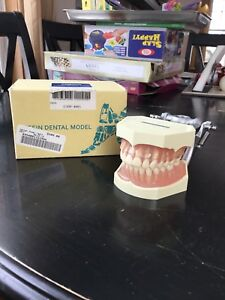 Kilgore Nissin Dental Typodont Model 200 With Removable Teeth