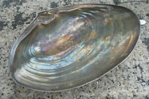 Vintage Wallace 393 Sterling Silver Large Clam Shell 6 1 4 X 4 Inches Dish Bowl